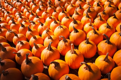 Fall Activities in Indianapolis